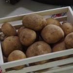 Krompir - vabilo na razstavo